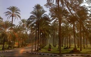 Александрия 5